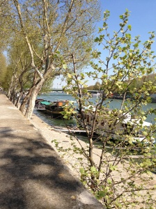 Walking along the river Rhine